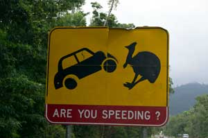 road sign warning about crashing into cassowaries