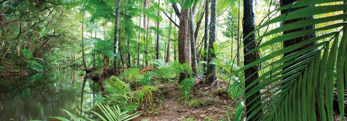 picture of daintree rainforest