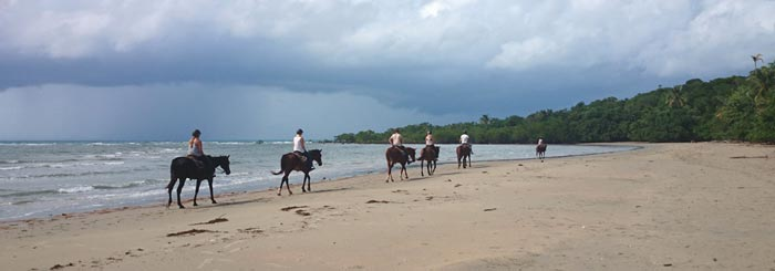 picture of cape trib horse riding on beach, daintree