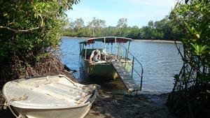 cape trib croc tour