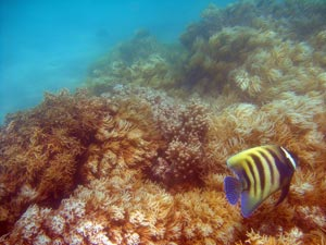 soft corals, low isles