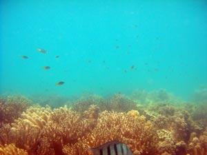 picture of low isles reef