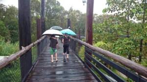 daintree wild zoo