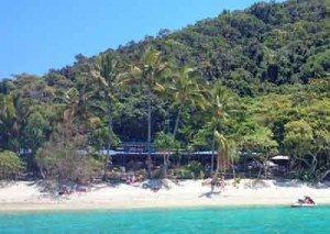 foxys beach bar fitzroy island