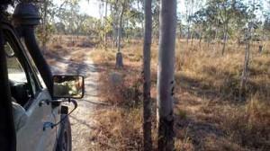 jabiru safari tour