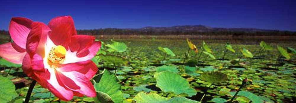 clancys lagoon mareeba wetlands