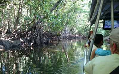 crocodile spotting cruise