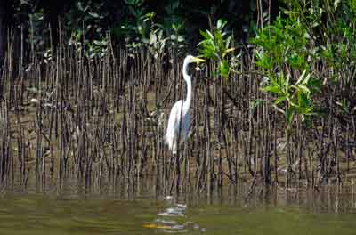 stork daintree river