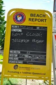 beach closed jellyfish