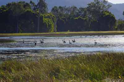 mareeba wetlands easy bird watching fnq