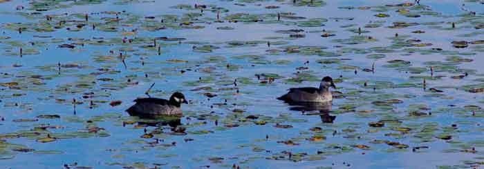 wetlands birdwatching cairns australia