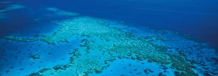 help the great barrier reef