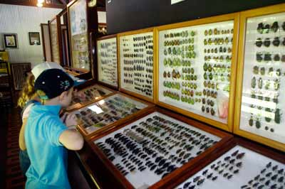 bugmuseum3
