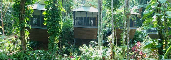 Daintree Eco Lodge: Luxury Treehouses in the Rainforest