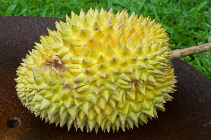 picture of durian