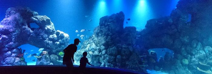 10 Reasons to Visit the Cairns Aquarium